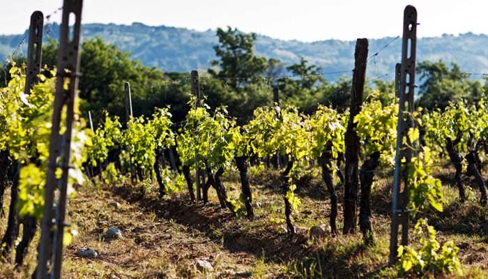 Photograph taken at Wedding of Italian Vines