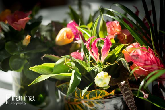 Tropical flowers in the Orangery