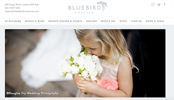 Bluebird Website & Brochure